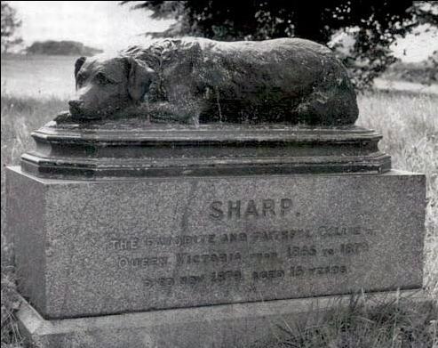 Sharp, el colie favorito de la Reina Victoria; murió en 1879, tuvo 15 años