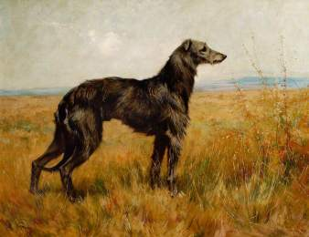 Wardle, Arthur; Portrait of a Deerhound, Champion Earl II; British Sporting Art Trust; http://www.artuk.org/artworks/portrait-of-a-deerhound-champion-earl-ii-11493
