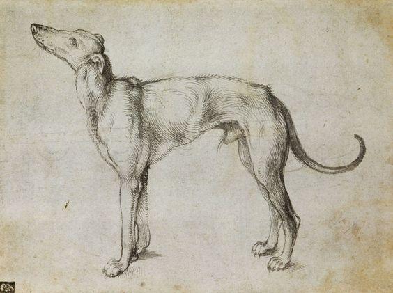 """Albrecht Durer """" Dibujo del perro"""""""