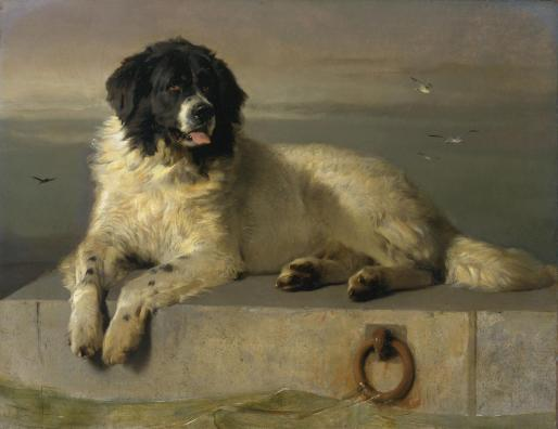 A Distinguished Member of the Humane Society exhibited 1838 Sir Edwin Henry Landseer 1802-1873 Bequeathed by Newman Smith 1887 http://www.tate.org.uk/art/work/N01226