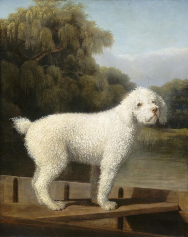 """George Stubbs """"El poodle blanco"""""""