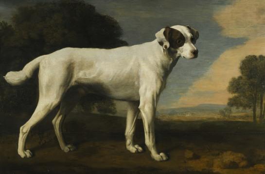 """George Stubbs """"El perro blanco de Viscount Gormantson"""" 1781"""